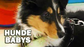 Hundebabys (Lehrfilm für Kinder auf deutsch, Kostenlose Dokumentation für Kinder, ganzer Lehrfilm)