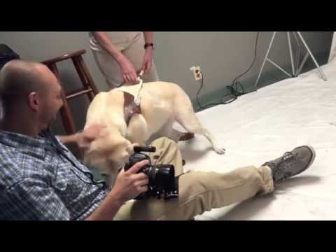 Behind the Scenes of Dog Photo Shoots