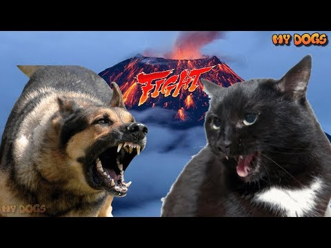 Cats vs Dogs / Cats Fighting Dogs