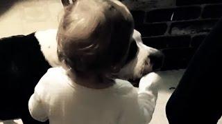 Baby Hand Feeds Killer Pit Bull