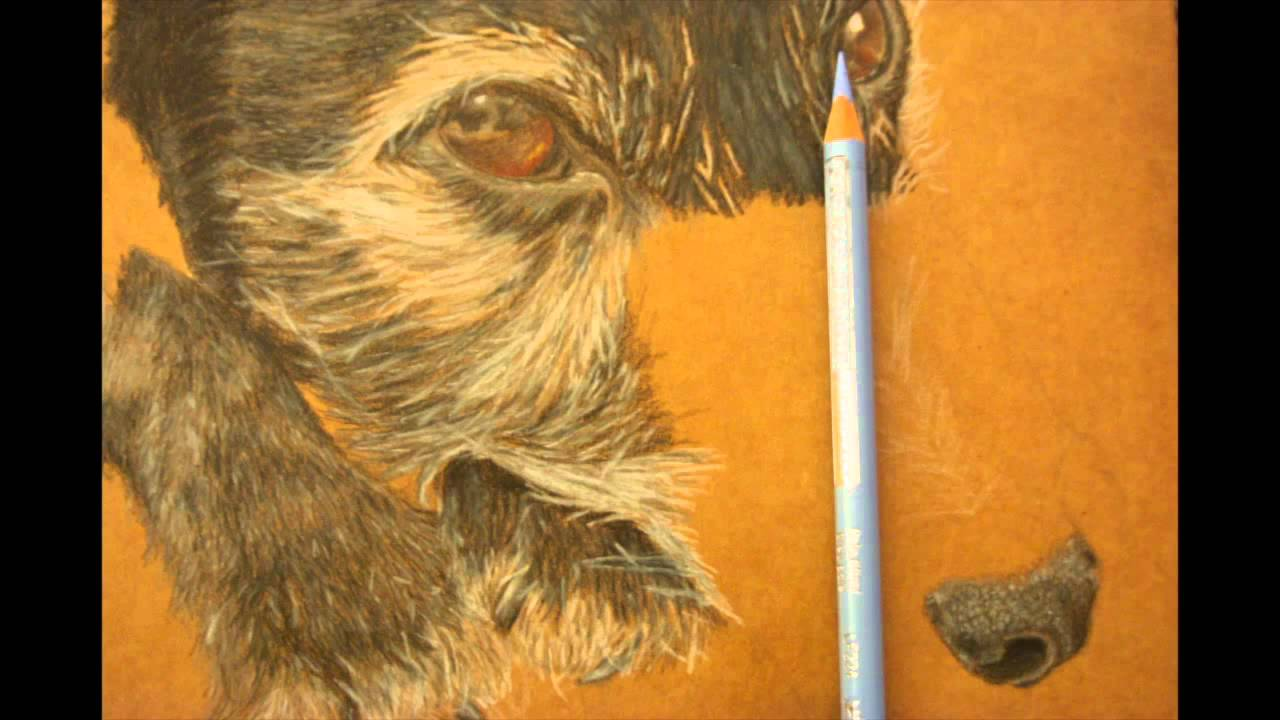 How to draw a dog in a photorealistic style part 4 shading the how to draw a dog in a photorealistic style part 4 shading the nose tam how to draw like ccuart Image collections