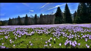 Frühling dringt in den Norden