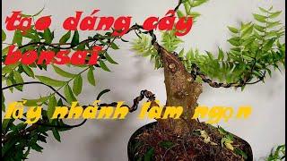 kỹ thuật uốn cây bonsai  cây cảnh miền tây 