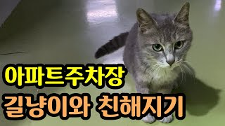 [냥알못] 길냥이와 친해지기 /  임신중? 출산후? 도…