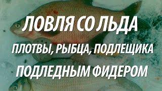 РЫБАЛКА ЗИМОЙ НА РЕКЕ ПОДЛЕДНЫМ ФИДЕРОМ(В видео, рыбалка зимой подледным фидером на реке. Как успешно ловить белую рыбу со льда, приготовить зимнюю..., 2015-12-16T12:37:14.000Z)