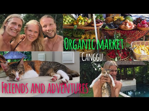 ORGANIC MARKET CANGGU, MEETING FRIENDS AND EPIC ADVENTURES VLOG