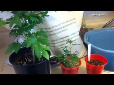 Best Soil Mix For Cannabis Seedlings and Flowering Marijuana Plants - Home Weed Grow Tips