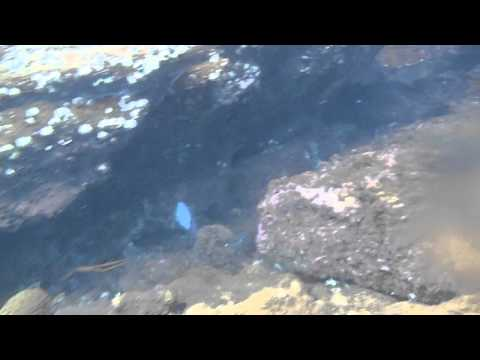 Nemo of Sweden: 1stMate snorkeling at Ilha de Cataguas