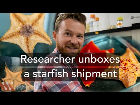 Researcher Unboxes A Starfish Shipment | Unusual Labmates