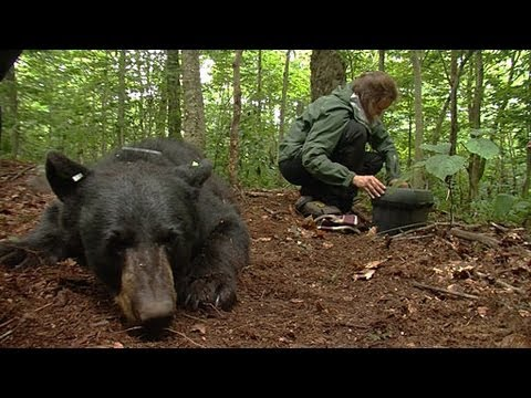 Black Bears In Vermont | Outdoor Journal | Season 11