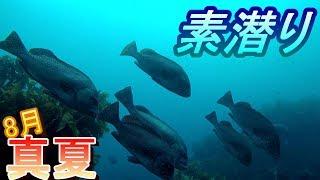 真夏の海で素潜りしました。 今日は魚が多く、水の中は涼しくて、とても...