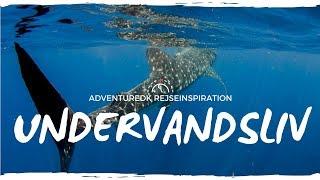 Undervandsliv - ADVENTUREDK rejseinspiration