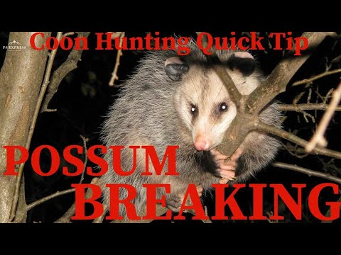 Coon Hunting Quick Tips / Possum Breaking