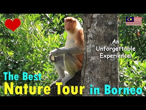 THE BEST NATURE TOUR EVER! (SABAH, BORNEO) | June 27th, 2017 | Vlog #152