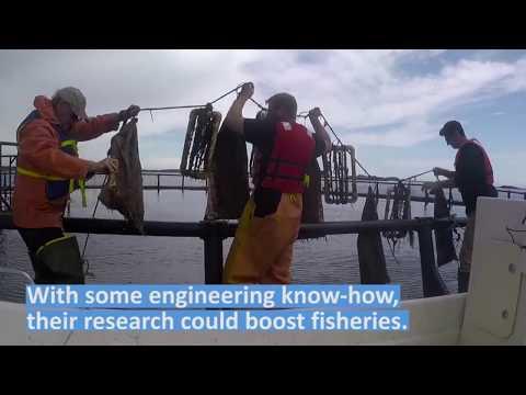 Engineering innovation to boost shellfish diversity, jobs
