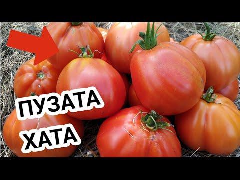 Вопрос: Томат Пузатая хата, как выращивать и какой на вкус?
