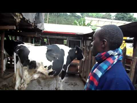 Mkulima Young Champion -Yoghurt venture to help school leaver pay university fees.