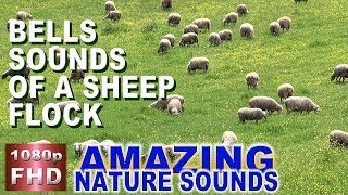 Bells sound of a sheep flock # 30 minutes meditation relaxation ambient sounds # 1080p vid