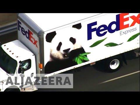 Panda diplomacy: China's animal envoys arrive in Berlin