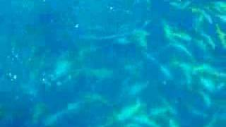 Yellowtail Snapper fishing out of Key West, FL