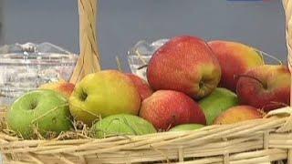 Яблочный уксус польза и вред. Как правильно сделать яблочный уксус в домашних условиях