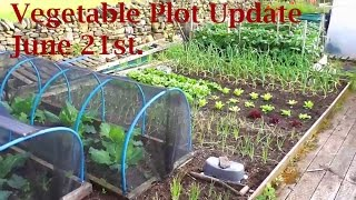 Allotment Diary June 21 : Vegetable Plot, Greenhouse & Polytunnel Veg Gardening Update