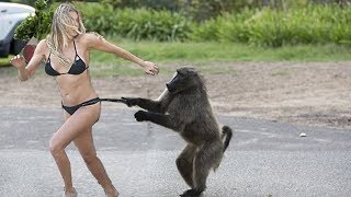 Funny Animals Attacking People - Funny Animals Video