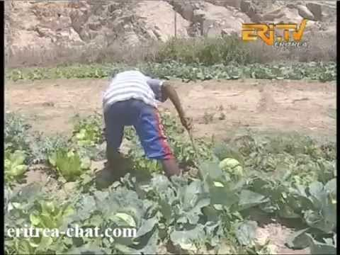 Eritrean Role Model Farmer from Nacfa - Eritrea TV