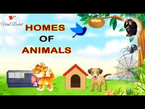 Animal Home Names for Kids in English || Homes of Animals and Birds | Animal and Their Home Names