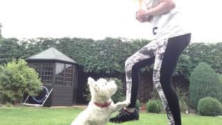 Canine Freestyle - Westie Tricks
