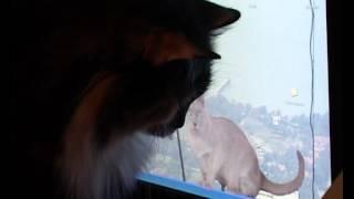 Кошка Муся играет с бегающими на мониторе зверьками
