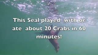 Seal rips legs of Crabs