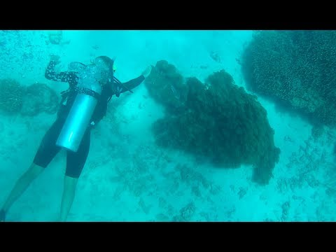 Diving the Great Barrier Reef! #16