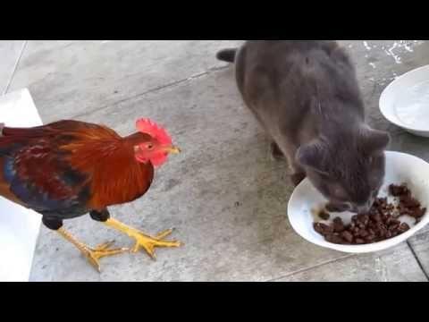 Animales robando comida.
