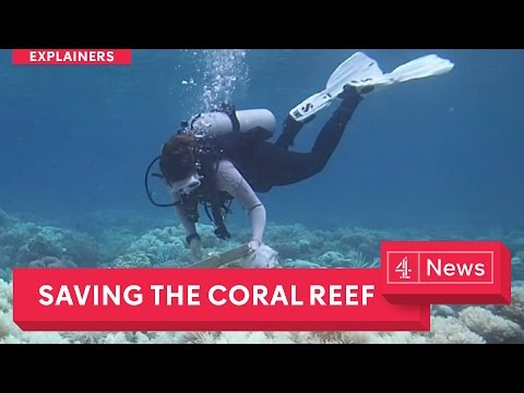 Saving the environment: starting with coral reef bleaching