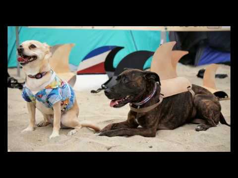 Imperial Beach Dog Surfing Competition 2017