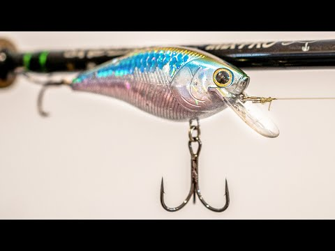 Where Do Bass Go During The Fall Transition? (And How To Catch Them!)