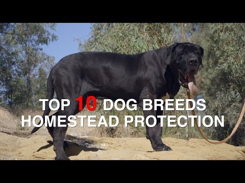TOP 10 DOG BREEDS FOR HOMESTEAD PROTECTION
