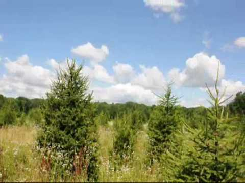 Growing Arbs and Pines