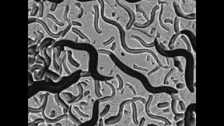 Nature Nanotechnology - University at Buffalo Research
