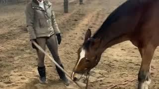 Супер 👏🏻 прикольный конь 😍