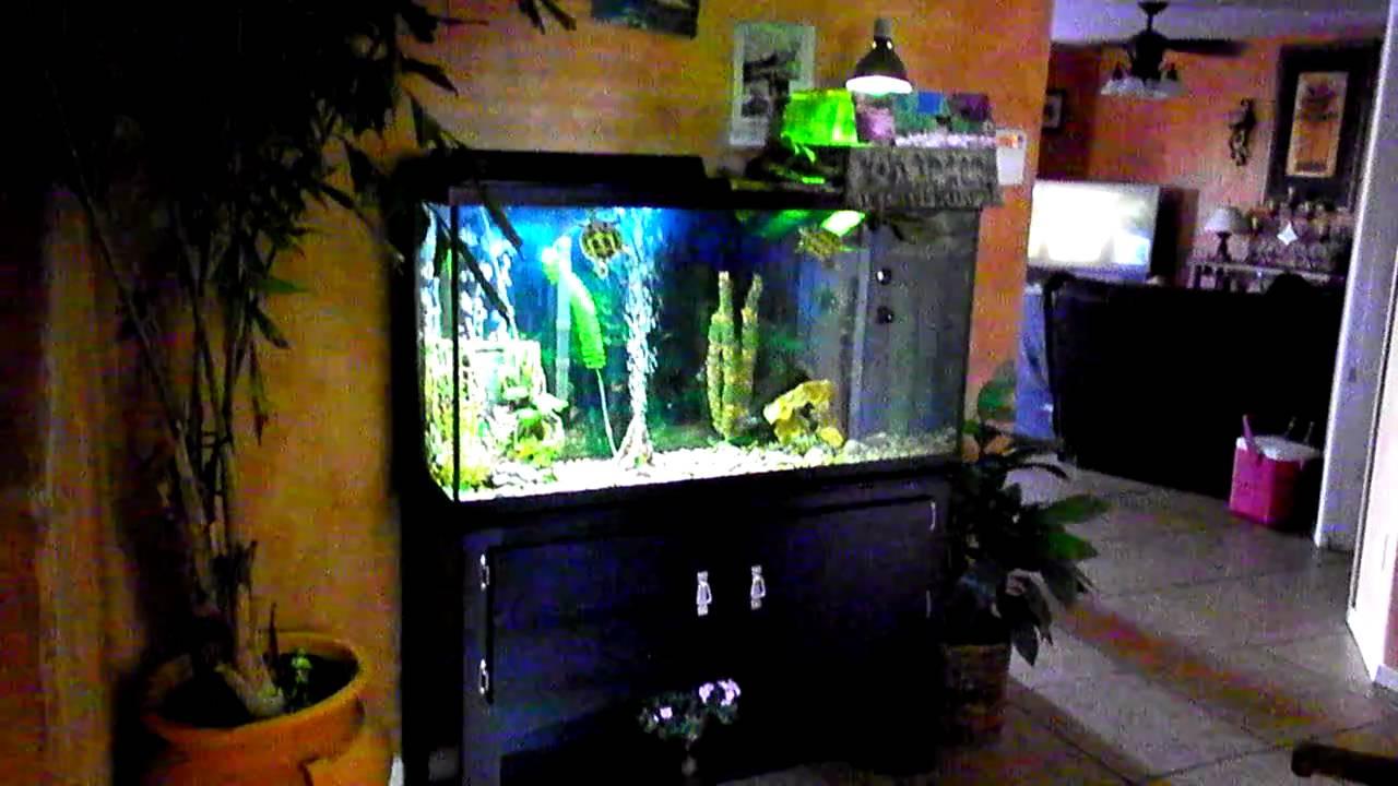 clean 60 gallon turtle tank setup youtube