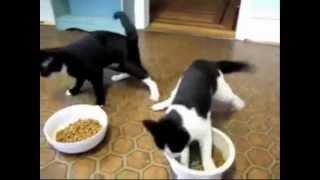 Коты под валерьянкой / drunk cats / Push The Tempo