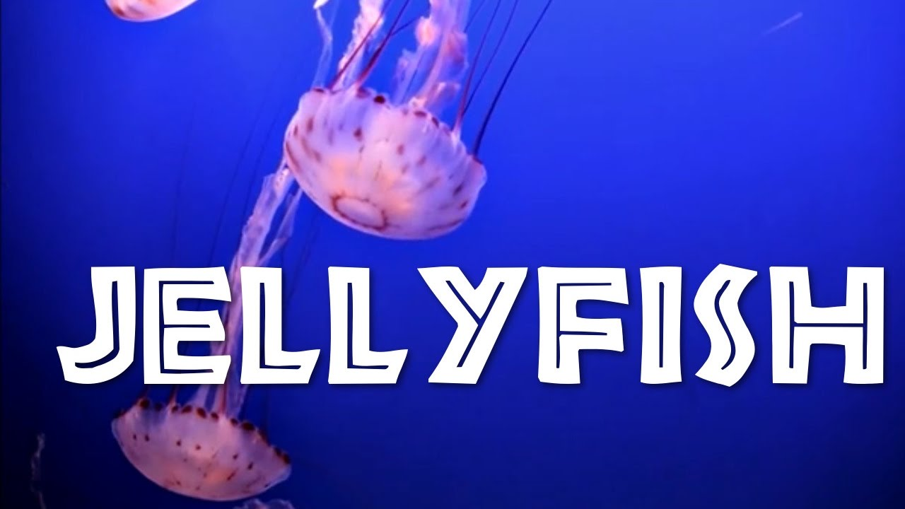 All About Jellyfish fo...