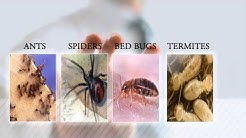 Portland OR Ant Removal | Pest Control & Ant Removal Vancouver WA | AntWorks Pest Control