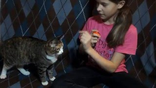 Как научить кошку команде