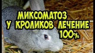 Миксоматоз у кроликов / МИКСОМАТОЗ простое лечение