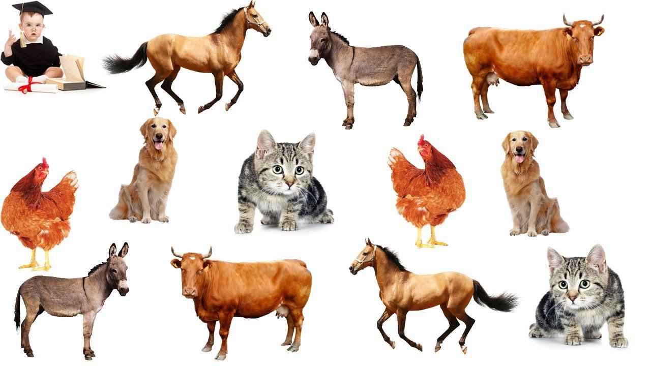 Картинки животных из кусочков. - YouTube