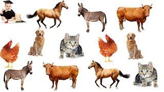 Картинки животных из кусочков.