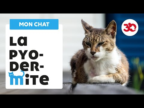 La Pyodermite Du Chat
